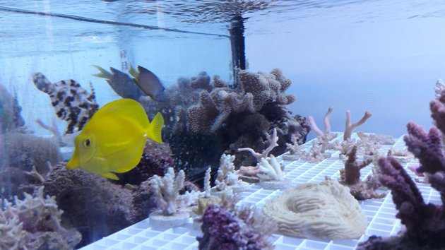 Marseille : Coral Biome à la pointe du traitement contre le cancer