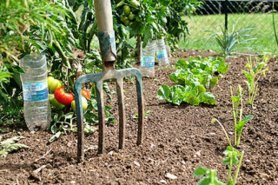 Photo jardin potager