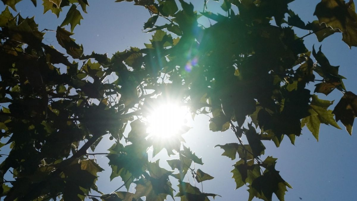 Canicule en Occitanie : 6 départements placés en vigilance orange