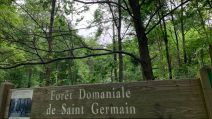 foret saint germain