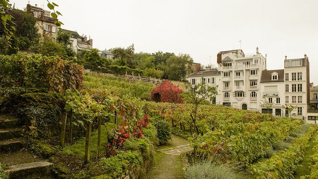 Le clos Montmartre, unique vigne de Paris. / © Flickr / Son of Groucho