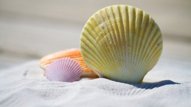 Coquillages - Sable - Plage / © Pixabay