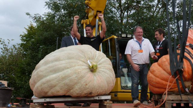 La Mothe-Achard : record de France, la plus grosse citrouille pèse 646,5 kg