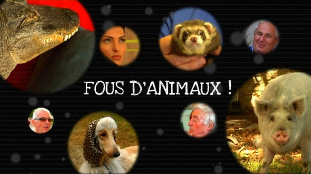 Fous d'animaux