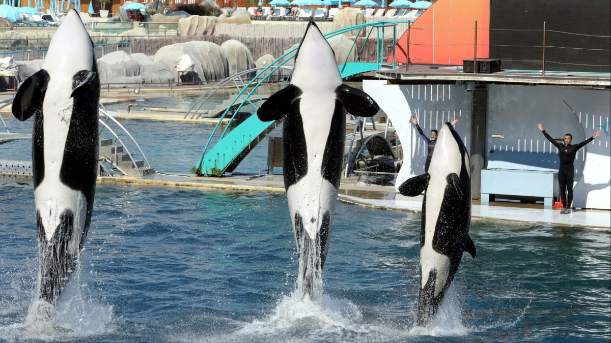 Marineland garde ses dauphins, le Conseil d'Etat annule l'interdiction de reproduction — Antibes