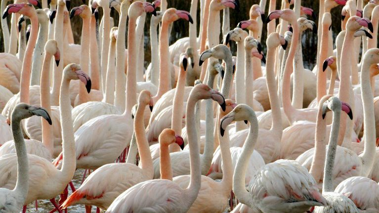 Aigues-Mortes : 500 oeufs de flamants roses perdus à cause d'un tournage de film