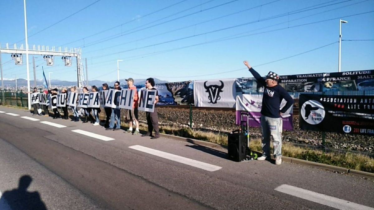 Antibes : Une centaine de manifestants anti-captivité devant Marineland