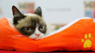 Grumpy cat pour un lundi. / © JEMAL COUNTESS / GETTY IMAGES NORTH AMERICA / AFP