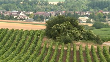 © Philippe Mercier - France 3 Champagne-Ardenne