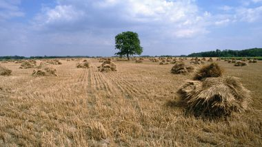 Terre agricole dans l'Indre / © James Hardy - Max PPP