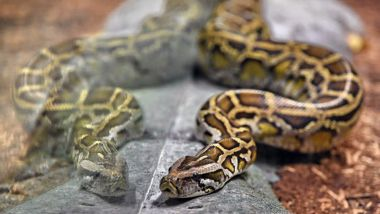 Un python dans un zoo / © Photo AFP