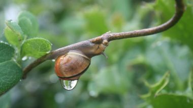 © Snail Rain Sweating via Pixabay