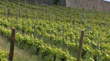 Beaujolais : le vignoble / © France 3 RA