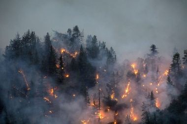 Un incendie dans la forêt nationale de Los Angeles ce vendredi 11 septembre / © DAVID MCNEW / GETTY IMAGES NORTH AMERICA / Getty Images via AFP