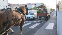 vendargues herault caleche transport scolaire chevaux