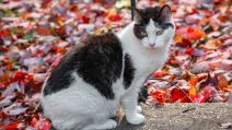Chat Automne